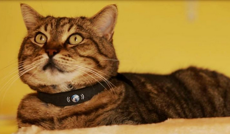 Pettracer Gps Cat Collar App For Real Time Tracking